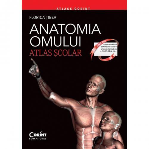 Carte Editura Corint - Atlas scolar anatomia omului - editie revizuita - Florica Tibea - Carti pentru copii -